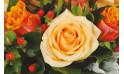 zoom sur une magnifique rose saumon