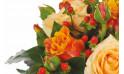 zoom sur une rose orange