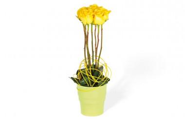 image de la composition de roses jaune Lily