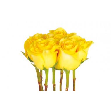 zoom sur les roses jaunes