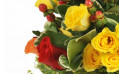 zoom sur une rose jaune et rouge