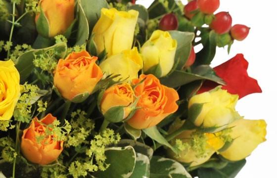 zoom sur des rose oranges