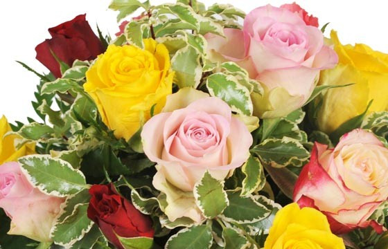 zoom sur des roses roses et roses jaunes