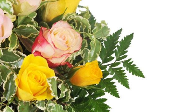 zoom sur de vieilles roses