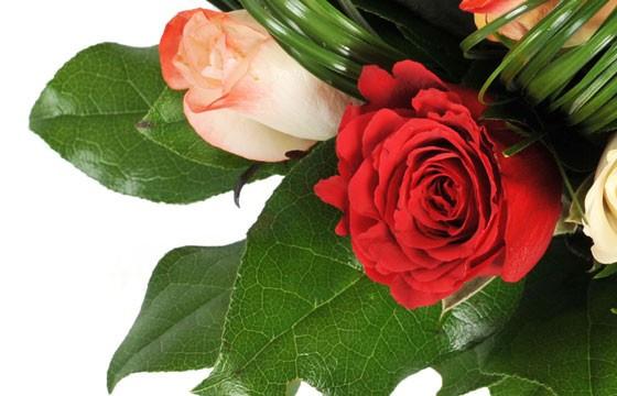 zoom sur une rose rouge du bouquet Joie