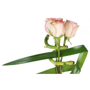 zoom sur les roses roses