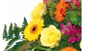 vue sur des roses jaunes et gerberas jaunes