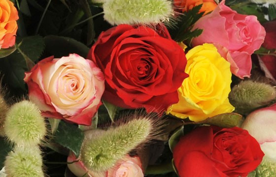 zoom sur une magnifique rose rouge de la composition Florever