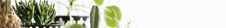 Plantes dépolluantes | livraison par un artisan fleuriste 7j/7 en 4h