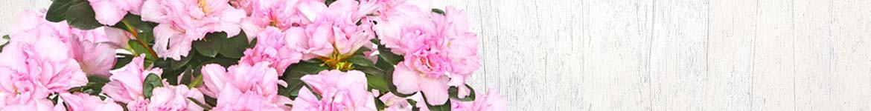 Livraison de plantes de saison par un artisan fleuriste français