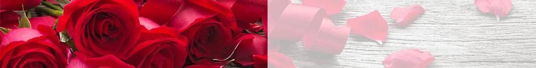 Roses rouges & blanches | livraison de fleurs pour la Saint Valentin