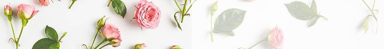 Roses roses & autres couleurs |Livraison de fleurs Saint Valentin