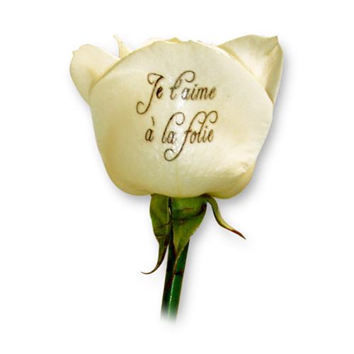 Livraison fleurs et roses blanches imprim es for Livraison fleurs paypal