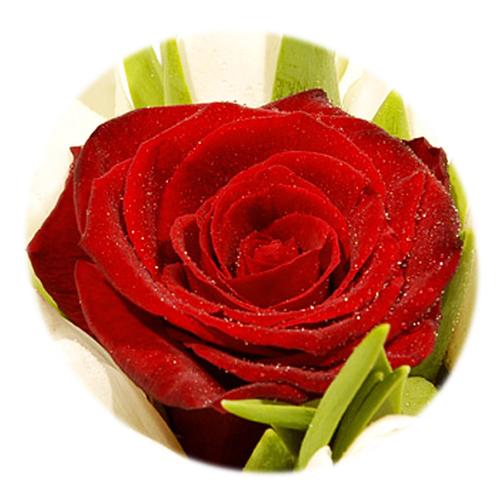 Livraison bouquet de tulipes blanches mon seul amour for Livraison tulipes