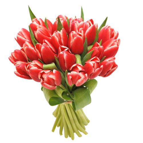 Bouquet tulipes livraison images for Livraison tulipes