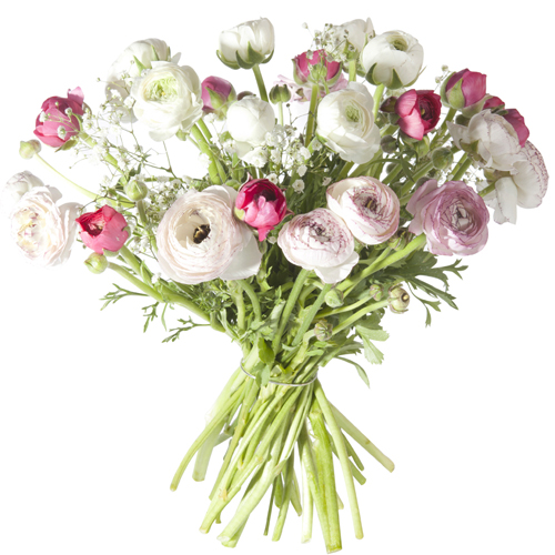 Livraison bouquet renoncules renoncules pastel - Mon espace client la poste nouvelle livraison ...