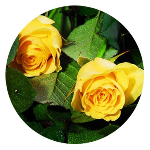 livraison bouquet roses jaunes livraison de roses jaunes. Black Bedroom Furniture Sets. Home Design Ideas