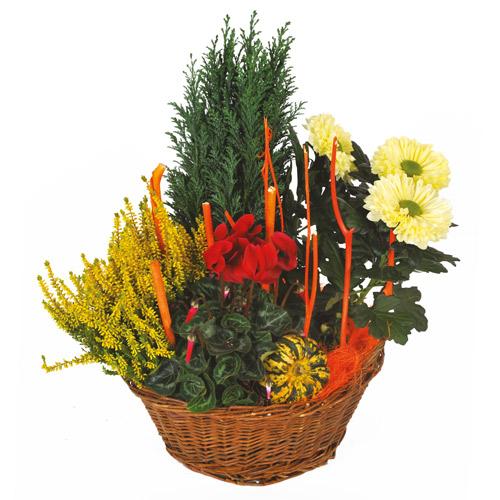 Composition deuil plantes rouge verte et jaune for Livraison fleurs paypal
