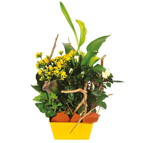 Composition deuil coupe de plantes jaunes et blanches for Commander des plantes