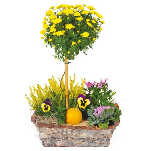 Composition deuil plantes orange mauve jaune for Commander des plantes