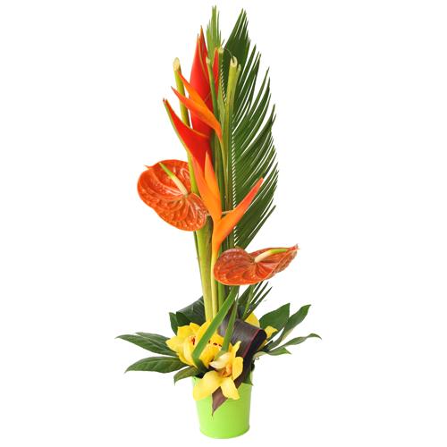 Composition exotique en hauteur avec oiseaux du paradis anthurium cymbidium - Composition de fleur ...