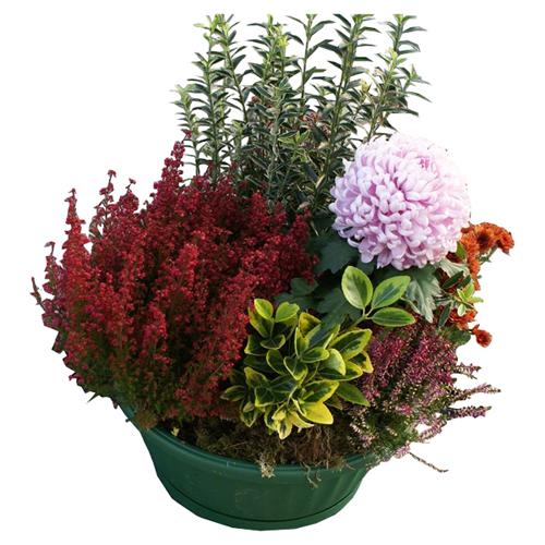 Le jardin de babylone coupe de plantes cimeti re rouge et rose pour un deuil - Mon espace client la poste nouvelle livraison ...