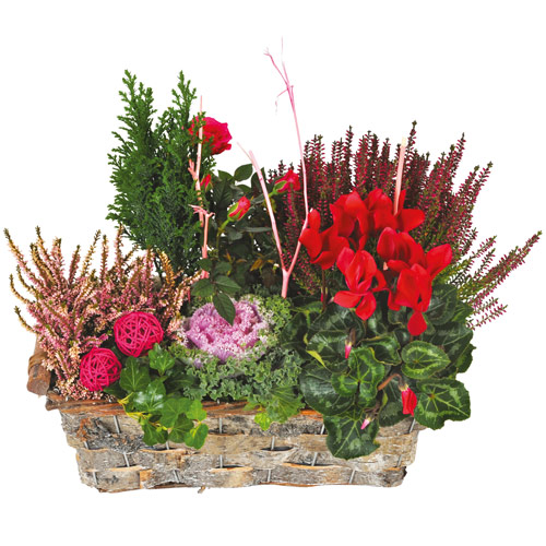 Composition de plantes deuil tons rouge parme for Commander des plantes