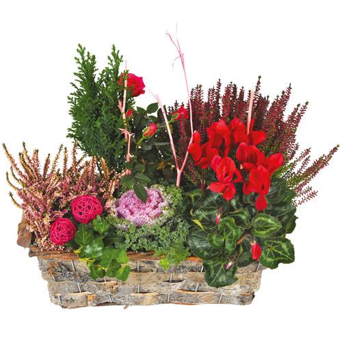 composition de plantes deuil tons rouge parme. Black Bedroom Furniture Sets. Home Design Ideas