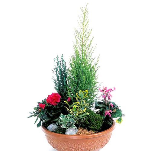 Coupe de plantes fushia et rouge pour le deuil for Commander des plantes
