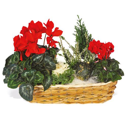Composition plantes vertes et fleuries pour le deuil for Commander des plantes