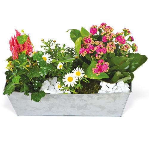 commander des plantes composition deuil plantes tons