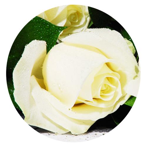 Livraison de roses blanches moyennes tiges for Livraison rose