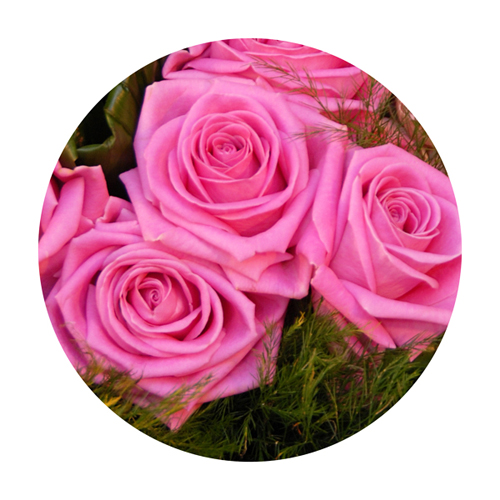 Livraison de fleurs et de roses rose longue tige for Livraison fleurs paypal