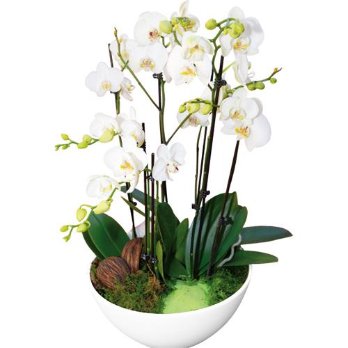 Coupe d 39 orchid es for Salon vert d eau