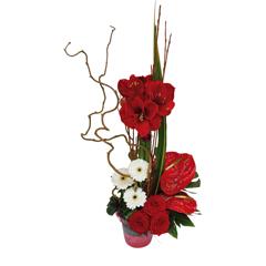 Les compositions florale for Amaryllis fleuriste