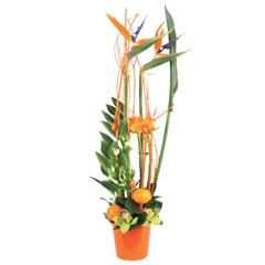 Livraison de fleurs envoi de bouquets en france for Livraison fleurs exotiques