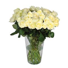 Livraison fleurs anniversaire l 39 agitateur for Livrer une rose