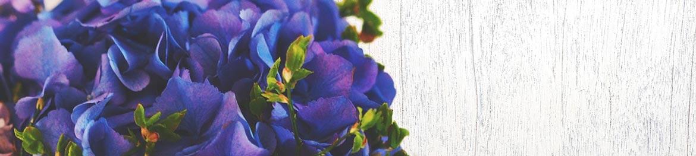 quelles significations pour les couleurs des fleurs. Black Bedroom Furniture Sets. Home Design Ideas