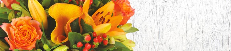 image de présentation de la couleur des fleurs rouges