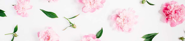 quelles fleurs offrir en amour : pivoine