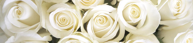 quelles fleurs offrir en amour : roses blanches